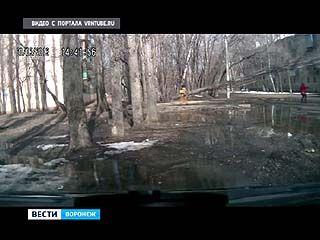 Жительница Воронежа чудом не попала под падающее дерево