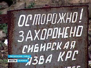 Жителям села Аношкино Лискинского района жизнь отравляет скотомогильник