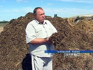 Животноводческие хозяйства заняты заготовкой кормов