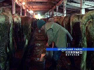 Животноводы спасли ферму в поселке Старый Эртиль