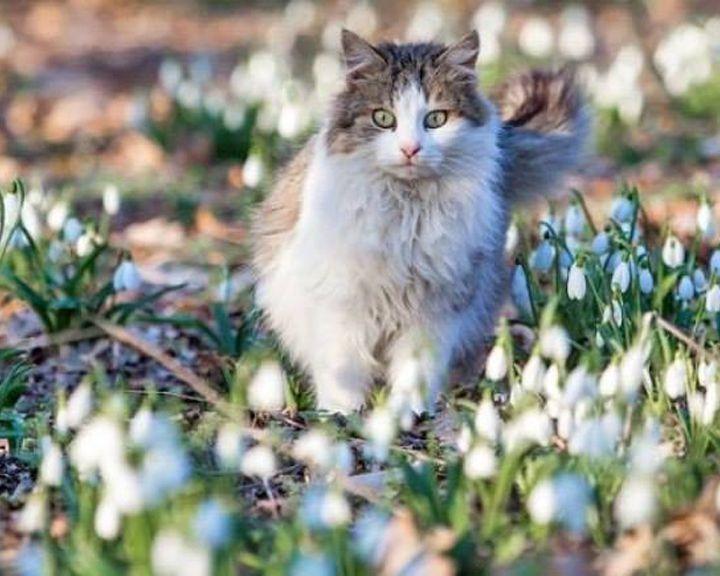 Зимние холода вот-вот покинут Воронежскую область