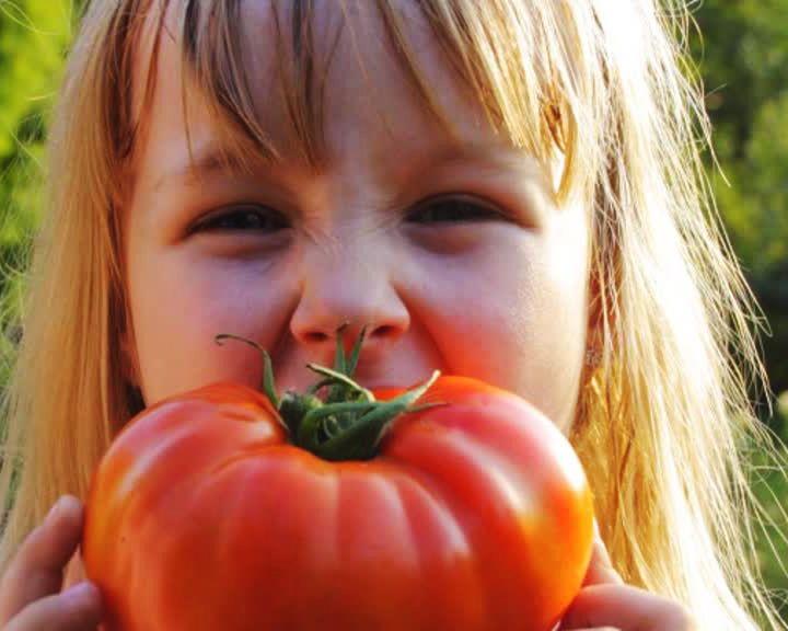 Выбираем лучшие сорта томатов с агрономом Иваном Бабиным