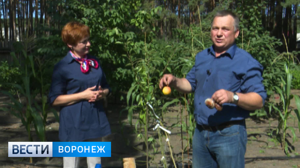 Собираем урожай вместе с воронежским агрономом Иваном Бабиным