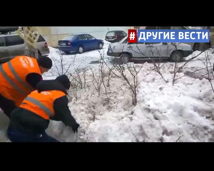 Столичные дворники маскировали сугробы под кустарник, чтобы не убирать снег