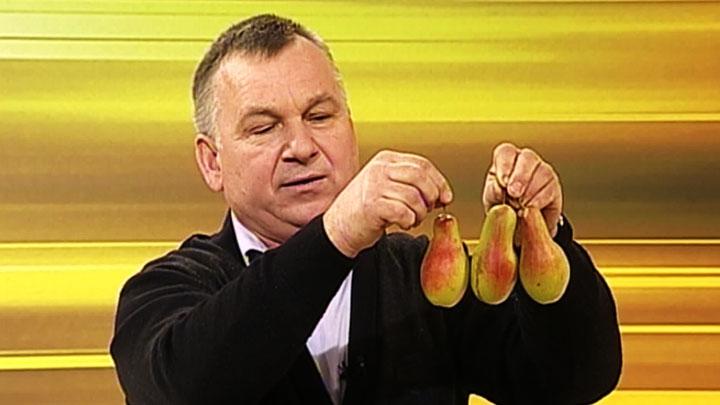Воронежский агроном Иван Бабин рассказал, как хранить фрукты зимой