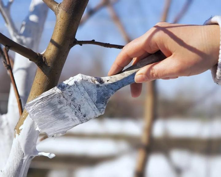 Как проводить первую обработку сада после зимы, рассказал агроном Иван Бабин