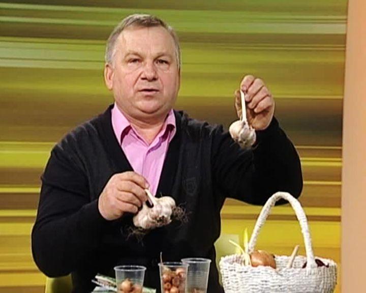 Агроном Иван Бабин: Как правильно хранить лук и чеснок
