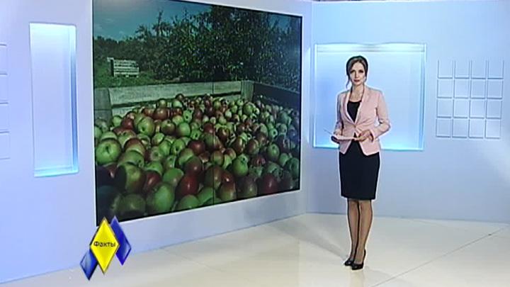 Почему воронежские яблоки не попадают на прилавки местных магазинов?