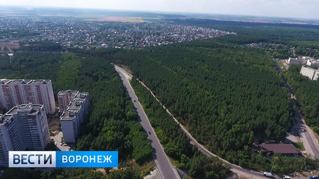 Вокруг Воронежа создадут лесопарковый зелёный пояс