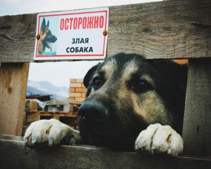 Закон по буквам: Воронежцев будут штрафовать за отсутствие таблички о собаке во дворе