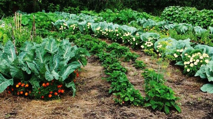 Воронежский агроном поделился мнением на счёт природного земледелия
