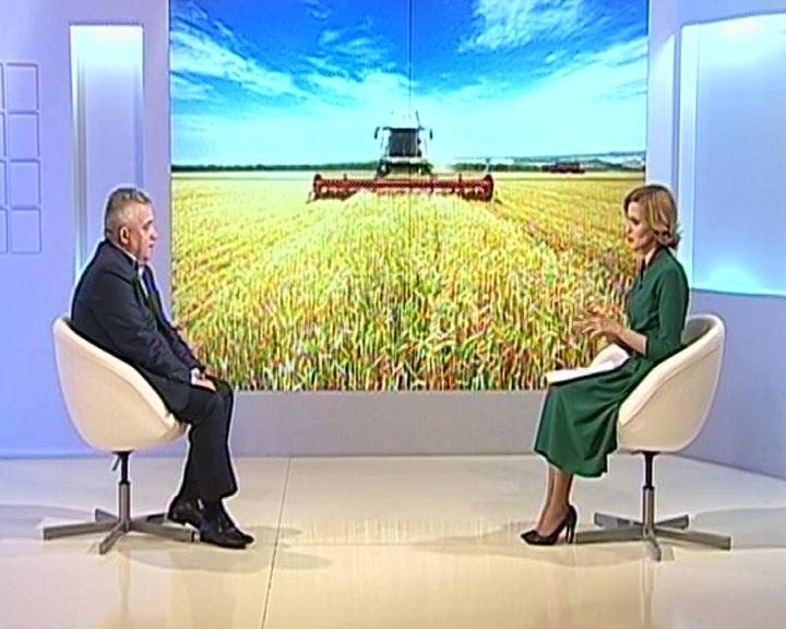 У Воронежской области есть шанс в очередной раз побить рекорд сбора зерновых