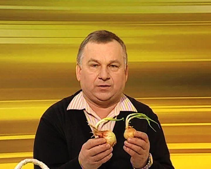 Воронежский агроном рассказал о том, как сохранить лук зимой