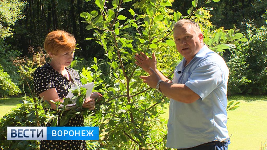 Воронежский агроном рассказал о лёгком способе летней прививки деревьев