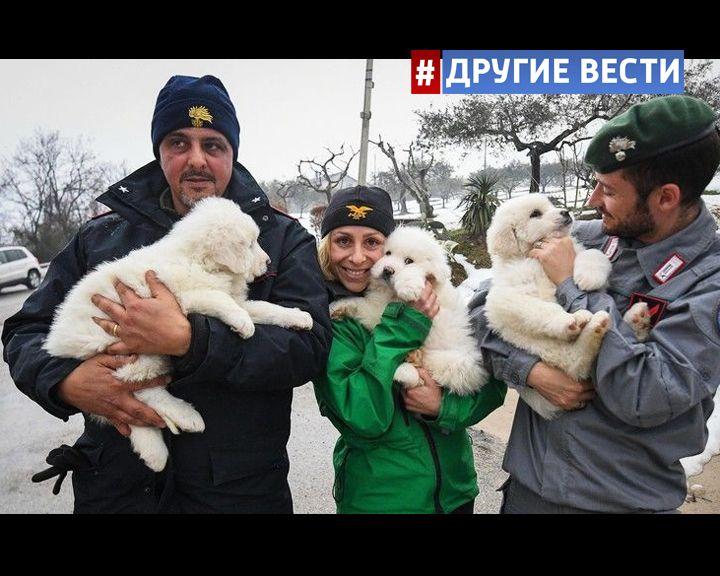 В Италии под обломками отеля, на который сошла снежная лавина, нашли трёх живых щенков