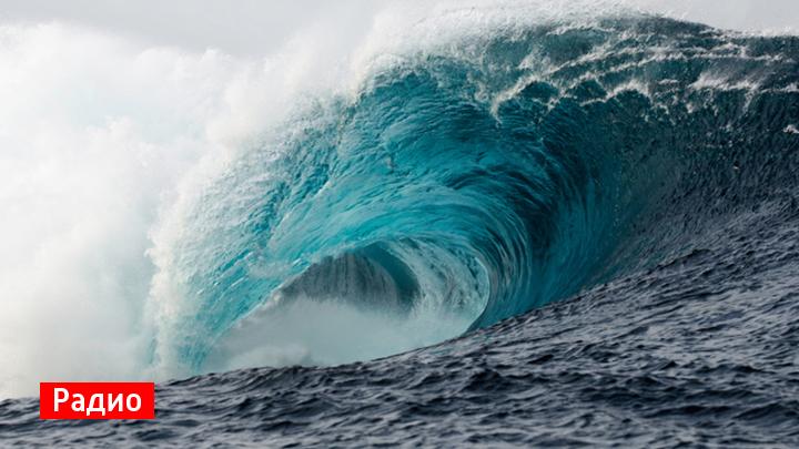 Воронежские филологи рассказали, какого рода слово «цунами»