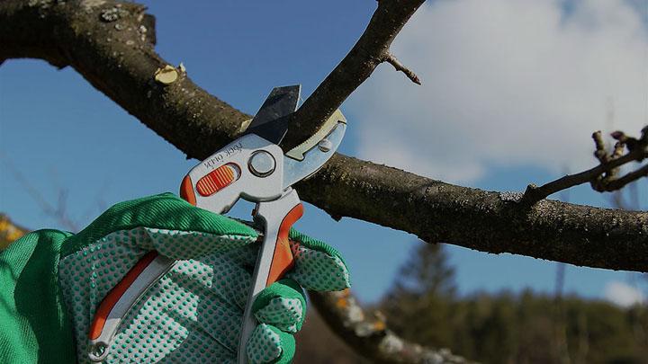 Важные правила весенней обрезки деревьев от агронома Ивана Бабина