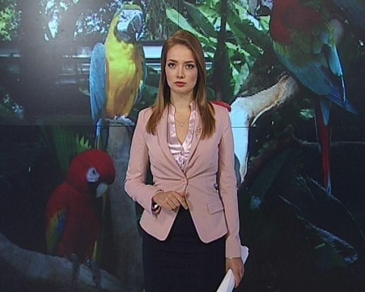 В зоне карантина: Опасен ли птичий грипп для воронежцев?