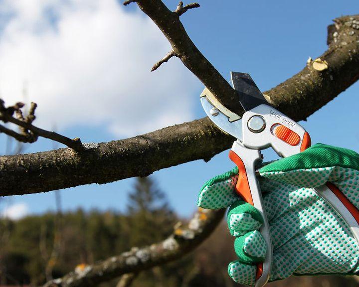Проводим обрезку деревьев вместе с «Сезоном забот» правильно
