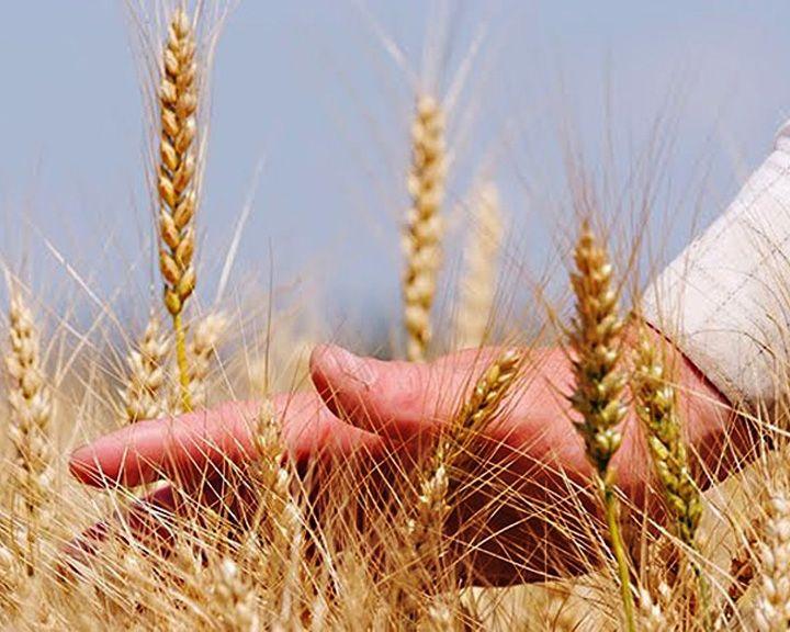 Просёлки: Как в Воронежской области школьный директор стал фермером