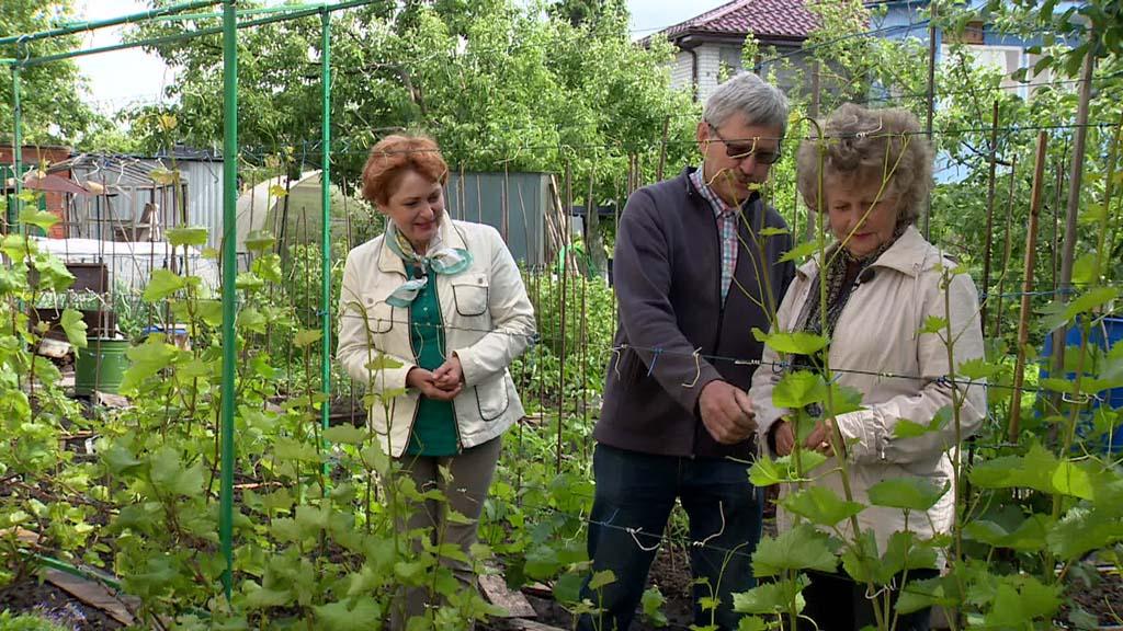 Практическое занятие с воронежским виноградарем Людмилой Михеевой