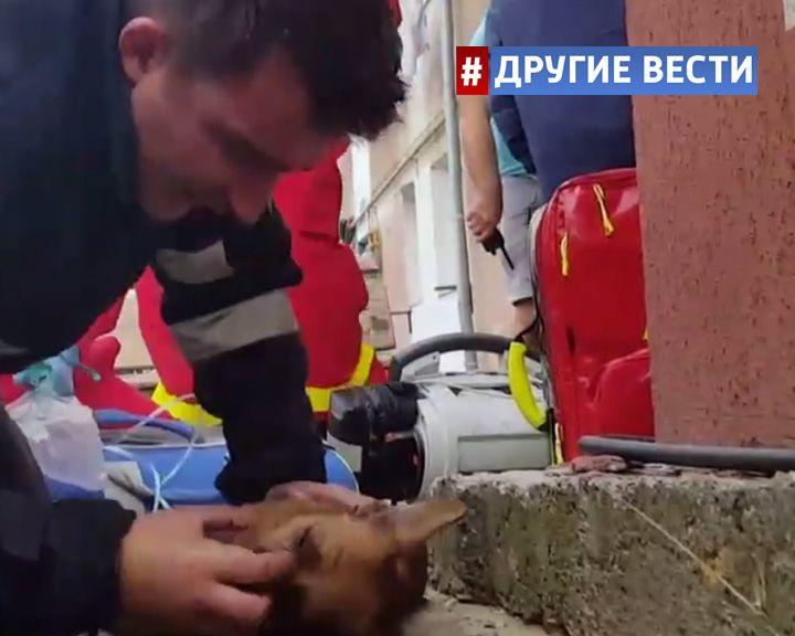 ВИДЕО: Румынский пожарный спас собаку, сделав ей искусственное дыхание