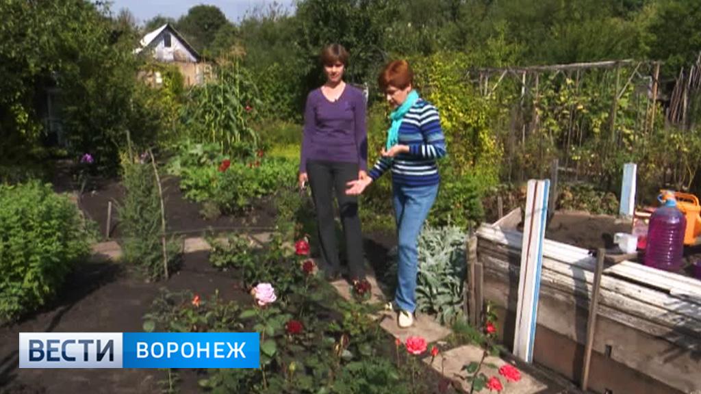 Воронежский агроном-цветовод о работах в осеннем саду