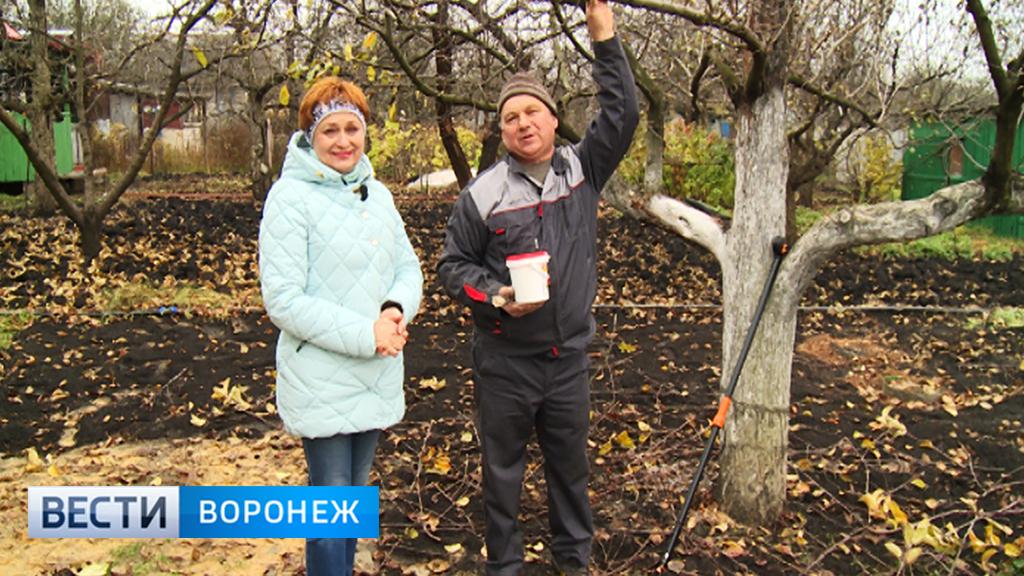 Воронежский агроном Иван Бабин рассказал, как подготовить плодовые деревья к зиме