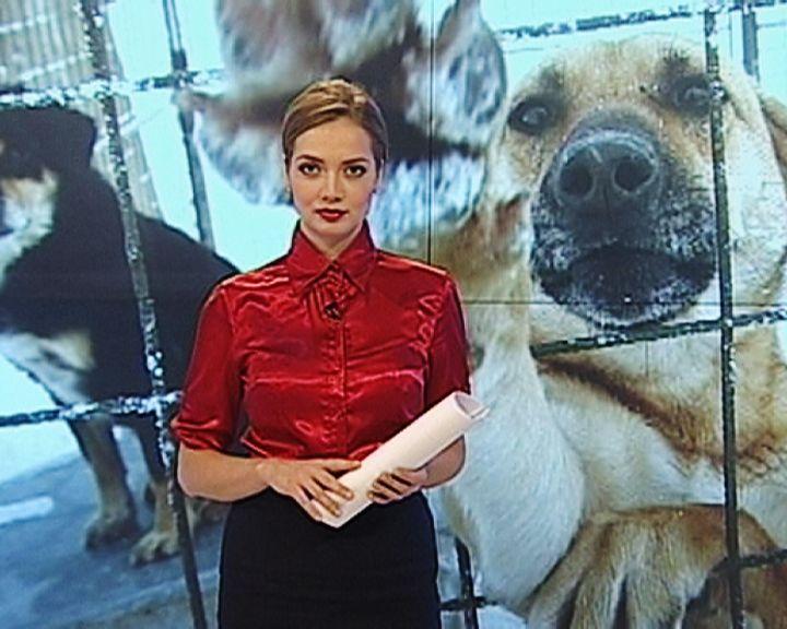 Как решают проблему бездомных собак в Воронеже