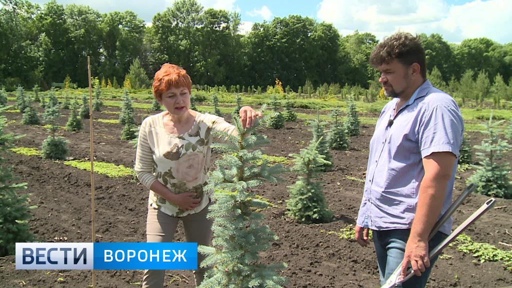 Мастер-класс от воронежского агронома Алексея Цепляева