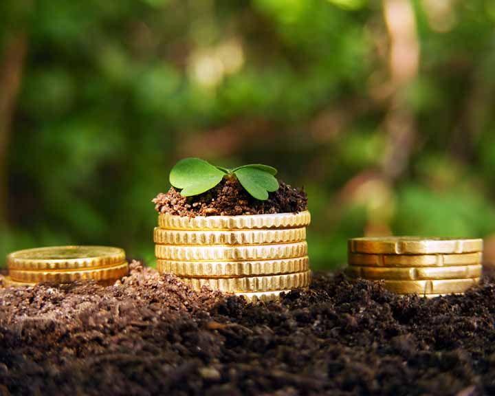 Факты: Какова роль воронежских аграриев в новой стратегии развития АПК?