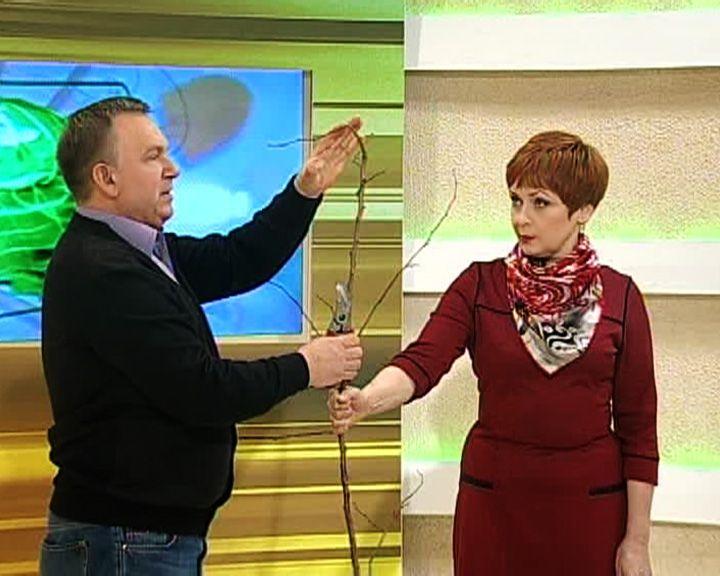 Агроном Иван Бабин показал, как правильно обрезать абрикосовые деревья
