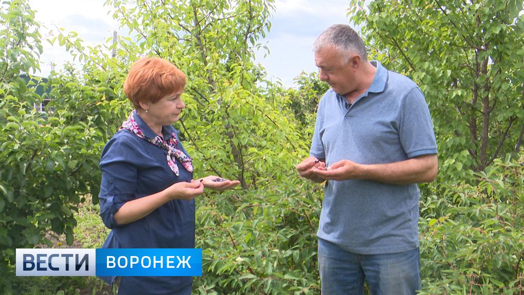 Воронежский садовод Александр Продан о странностях зимы и летних работах