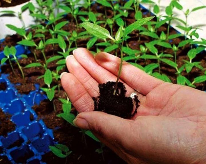 Время сажать рассаду – советы от агронома Ивана Бабина