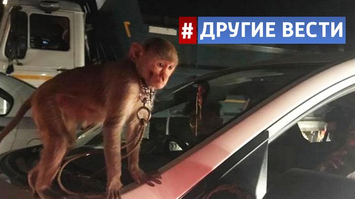 Сбежавшую из омского ночного клуба мартышку нашли за перебиранием двигателя в автомастерской