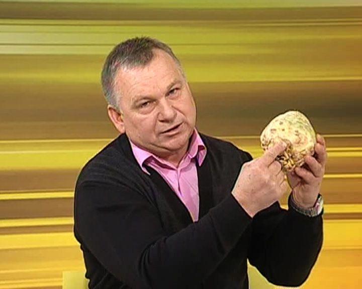 Воронежский агроном Иван Бабин рассказал, как вырастить корневой сельдерей