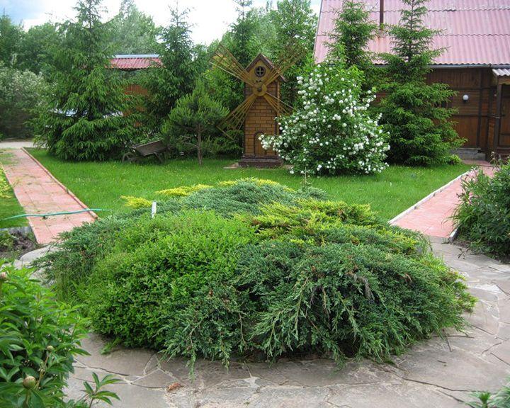 Сезон забот: Хвойные деревья и кустарники в дачном ландшафте