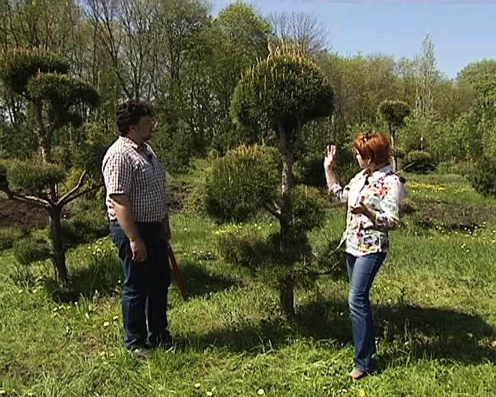 Сезон забот: Учимся делать бонсай из хвойных растений для своего сада